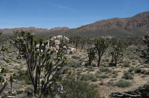 Explore Mojave National Preserve, California