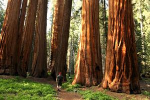 Explore Sequoia National Park, California