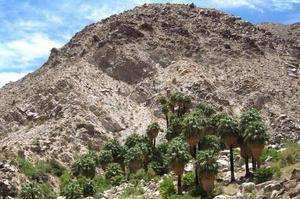 Hike to 49 Palms Oasis, Joshua Tree National Park