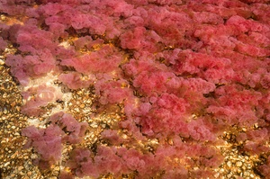 """Explore Caño Cristales """"The River of Five Colors"""", Colombia"""