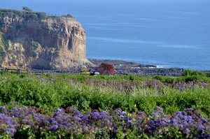 Explore Abalone Cove Shoreline Park, Rancho Palos Verdes, California