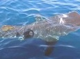 Whale Shark Group Adventure from Isla Holbox
