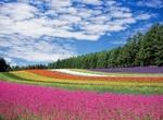 Top 5 Things to Do in Hokkaido Japan