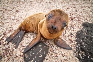 Visit Galápagos Islands, Ecuador (UNESCO Sites)
