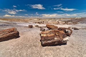 Explore Petrified Forest National Park, Arizona